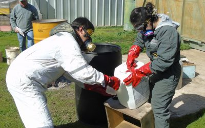 Seremi (Chilean Regional Ministerial Secretary) participates in bee disinfection classes.