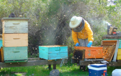 Chilean beekeepers describe the benefits of taking care of their hives health